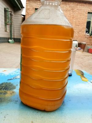 河北衡水油葵油