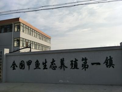江苏扬州宝应县野生甲鱼苗
