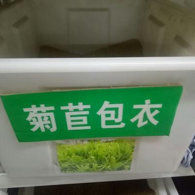 这是一张关于菊苣草种子 包衣的产品图片