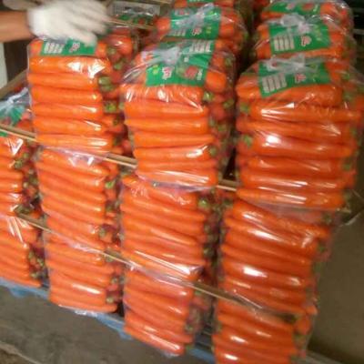 这是一张关于三红胡萝卜 15cm以上 4两以上 3~4cm的产品图片