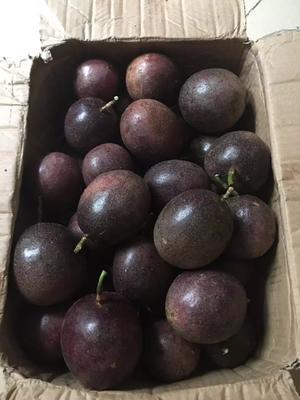 广西桂林紫香一号百香果 60 - 70克