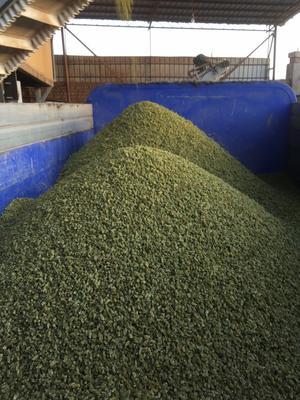 新疆吐鲁番无核白葡萄干 1年