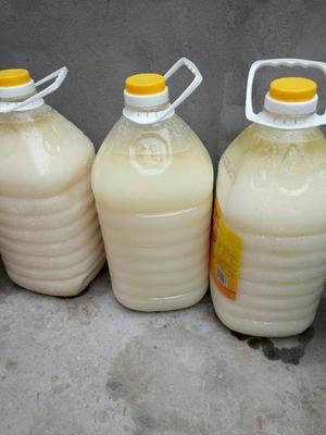 河南洛阳猪油