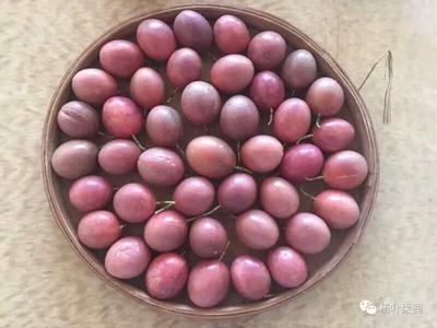 广东茂名紫红色百香果 70 - 80克