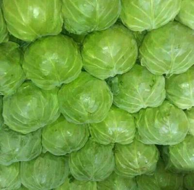河北邯郸中甘21甘蓝 1.5~2.0斤
