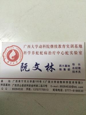 广西钦州水律蛇苗 水律蛇蛋