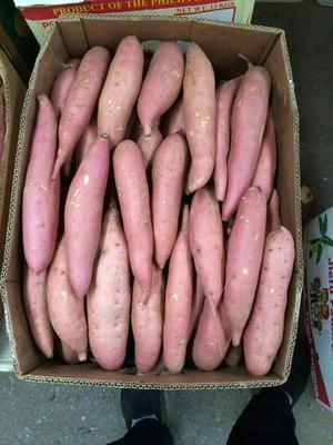河北唐山济薯26号红薯 3两以上 红皮