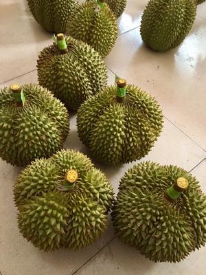 广西崇左泰国甲仑榴莲 2 - 3公斤 60 - 70%以上