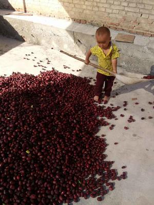 新疆吐鲁番坚果 24个月以上 散装