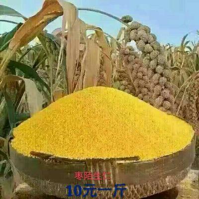 山西吕梁黄小米 农家小黄米