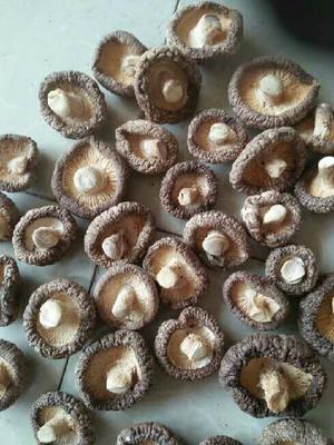 陕西汉中剪柄香菇 散装 1年以上 有各规格剪柄香菇。花菇。大片菇,菇腿。
