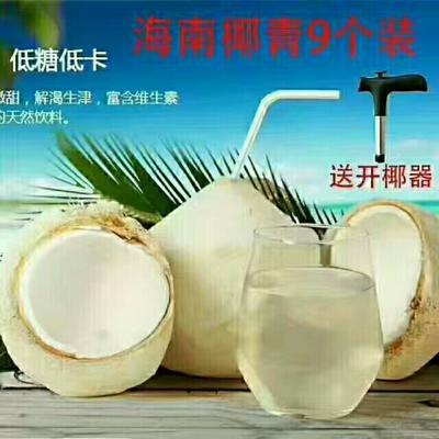海南儋州椰青 2.5 - 3斤