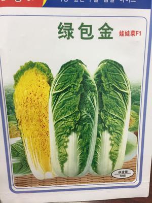 北京海淀区娃娃菜种子