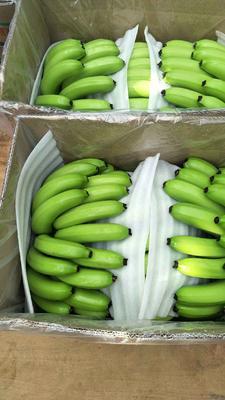 广西南宁巴西香蕉 40 - 50斤 七成熟 香蕉 巴西香蕉