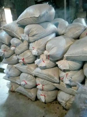 贵州铜仁野山茶籽
