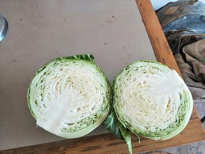 陕西省榆林市靖边县铁头圆包菜 6斤以上