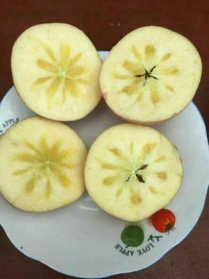 陕西咸阳冰糖心苹果 膜袋 日晒面 85mm以上 10斤净重包邮一件代发