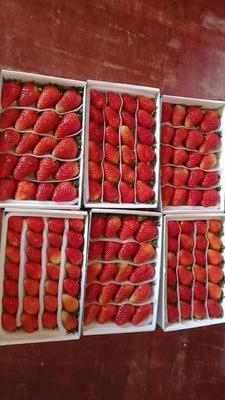 这是一张关于蒙特瑞草莓 20克以上的产品图片