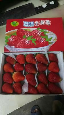 天津草莓 20克以下
