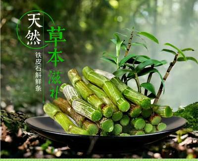 云南思茅铁皮石斛