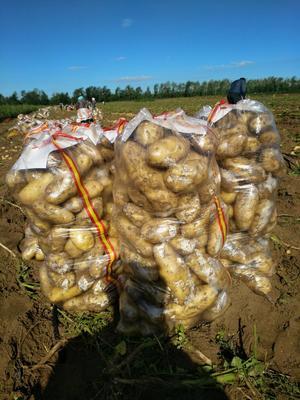 这是一张关于荷兰15号土豆 3两以上的产品图片
