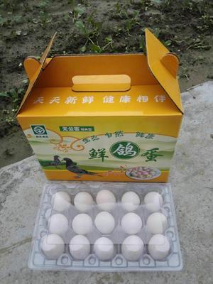 江苏省南通市如东县肉鸽蛋 食用 箱装