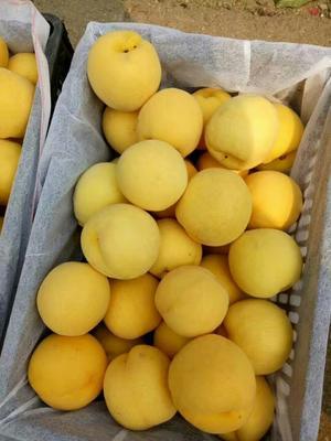 山东临沂黄金蜜桃 80mm以上 4两以上