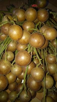 广西河池鸡皮果 球型 甜口