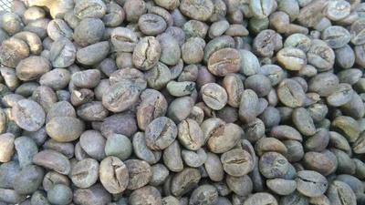 云南保山保山小粒咖啡生豆