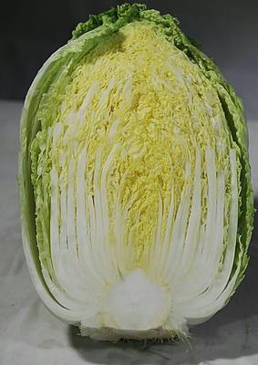 甘肃定西黄心大白菜 6~10斤 毛菜