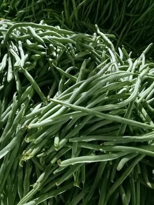 云南保山绿扁豆 20cm以上 2cm以上