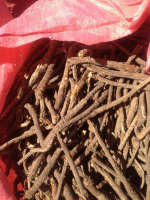 内蒙古呼伦贝尔防风 种子。呼伦贝尔。也生种子。
