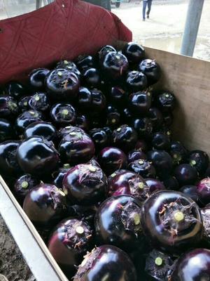 这是一张关于紫光圆茄 4两以上的产品图片