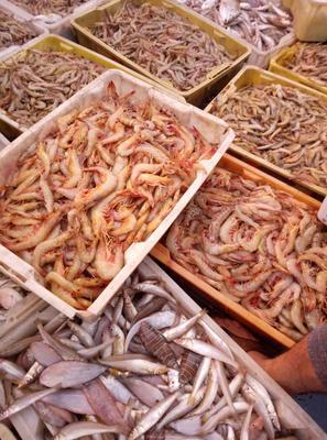 广西北海斑节对虾 野生 5-7钱