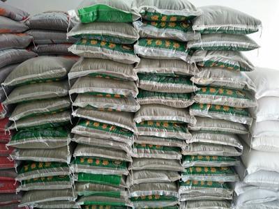 吉林辽源东北绿豆 袋装 2等品