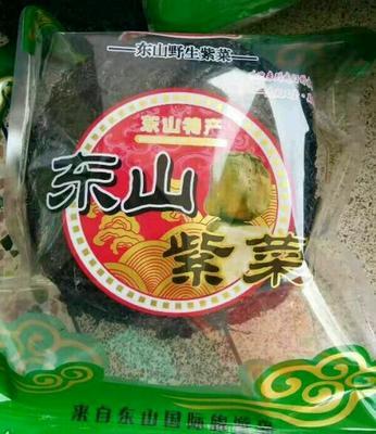 福建漳州东山紫菜
