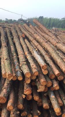 安徽宣城杉木 风景木撑,松树桩料