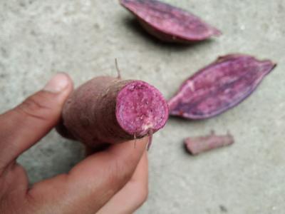 河南驻马店紫罗兰紫薯 3两以上