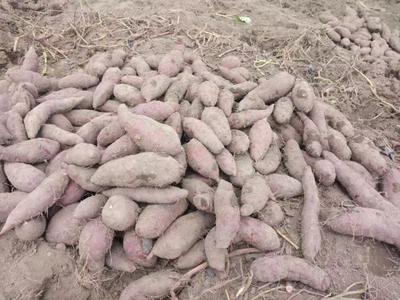 这是一张关于西瓜红 1~3两 红皮的产品图片