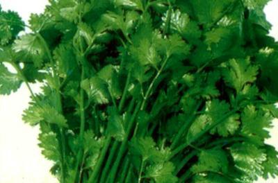 这是一张关于大叶香菜 25~30cm的产品图片
