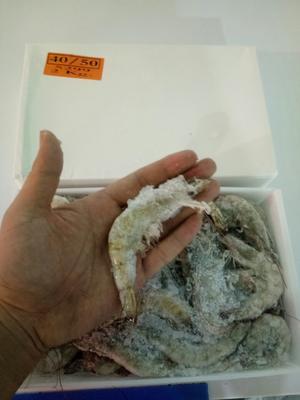 山东省潍坊市高密市基围虾单冻 人工殖养 4-6钱