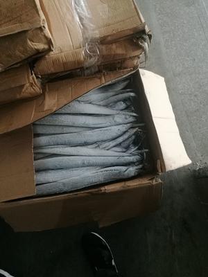 山东潍坊北部湾带鱼 0.5公斤以下 野生