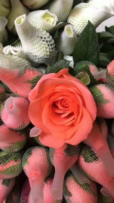 河南焦作红玫瑰