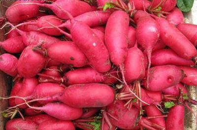 四川省成都市郫县满身红萝卜 0.2~1斤