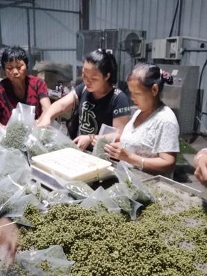 四川绵阳青花椒