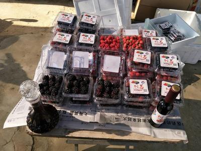 河南濮阳树莓酒 10-15度 1-3年