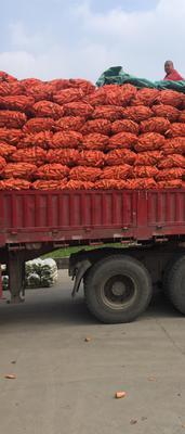 江苏盐城三红红萝卜 1.5~2斤