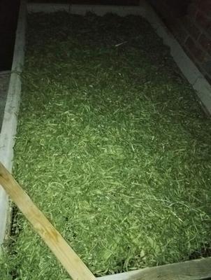 河北张家口扁豆 1cm以上 10cm以下
