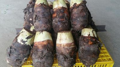 这是一张关于江永香芋 5cm以上的产品图片