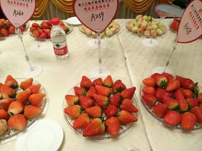 安徽合肥红颜草莓 20克以上